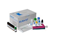 小鼠超敏C反应蛋白(hs-CRP)ELISA试剂盒