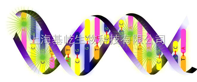 荧光定量PCR检测服务-SYBR染料法
