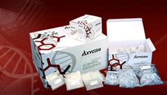 豚鼠白三烯B4(LTB4)ELISA试剂盒