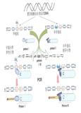 DNA甲基化检测服务