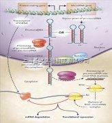 miRNA定量检测
