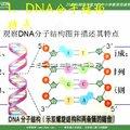 基因组DNA抽提