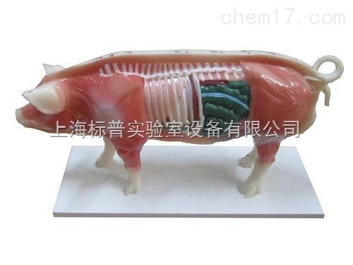 猪体针灸模型 中医专科训练模型