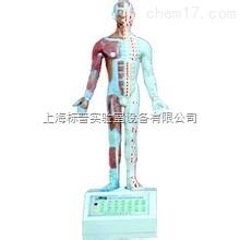电动十四针灸模型|中医专科训练模型