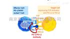 肿瘤免疫细胞株