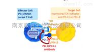 肿瘤免疫稳定细胞株