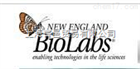 NEB M0202S T4 DNA 连接酶 20000U