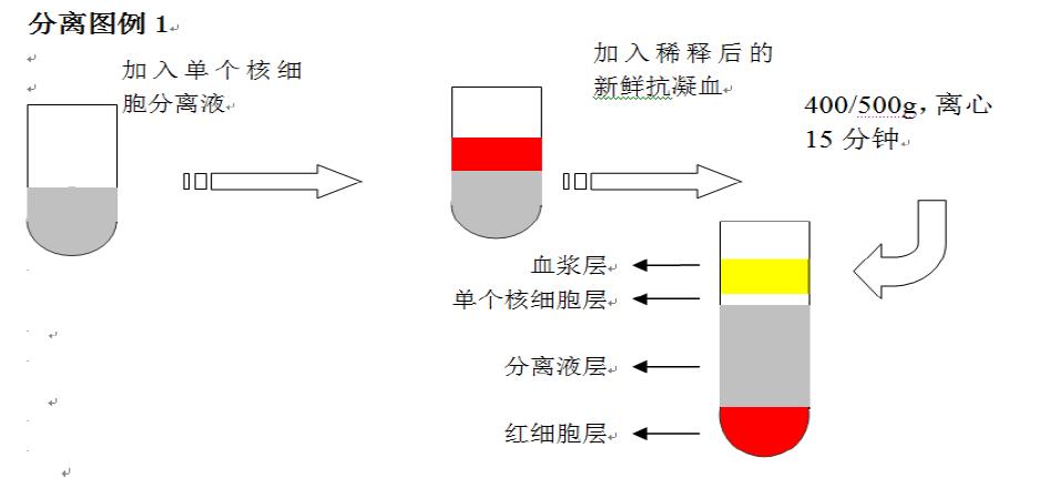 个核细胞分离液