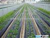 内蒙古地膜—地膜Z新报价—地膜优质生产—除草地膜—地膜批发