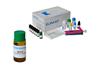 小鼠过氧化物酶体增殖因子活化受体γ( PPAR-γ)ELISA试剂盒